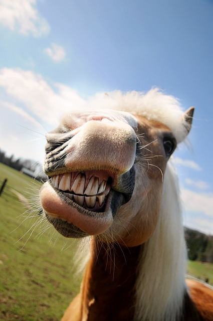 snarling hors resembles nosy people